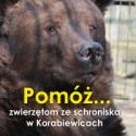 Adopcja psa Warszawa